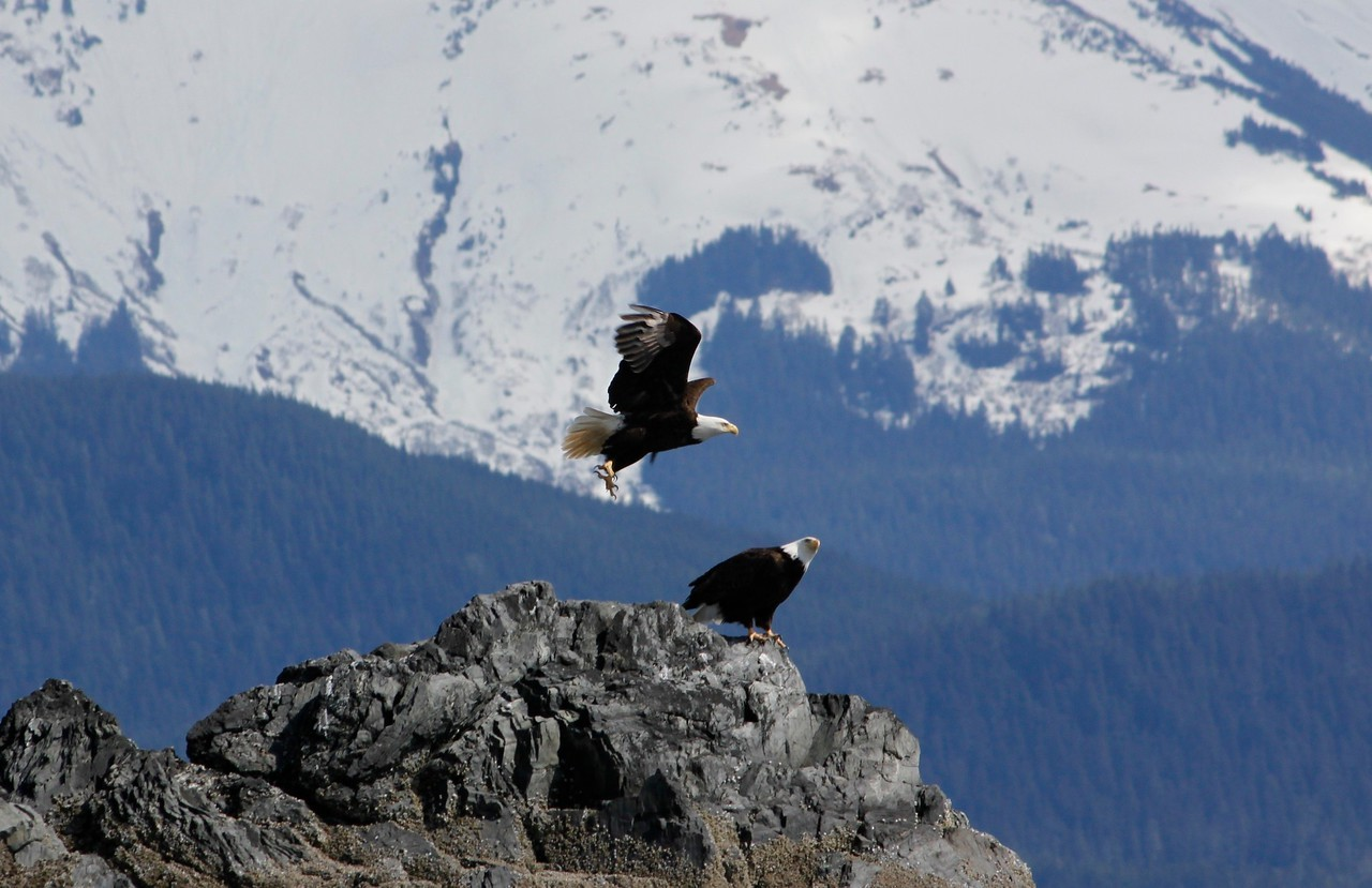 Wildlife in Juneau Area