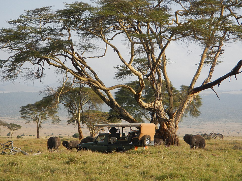Four-wheel drive safari
